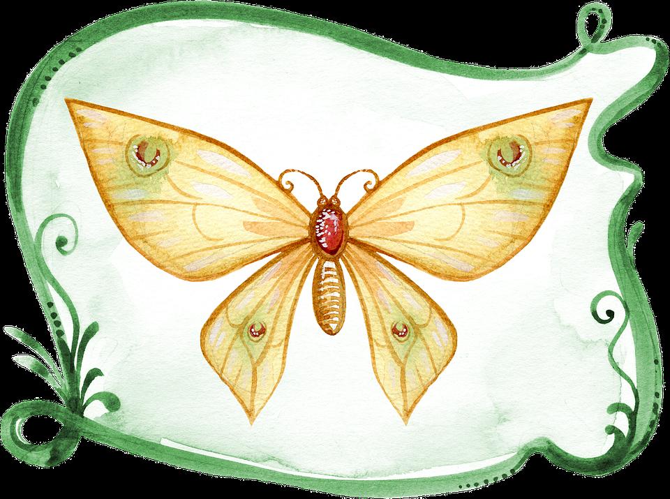 Kelebek Boyama Suluboya Pixabayde ücretsiz Resim