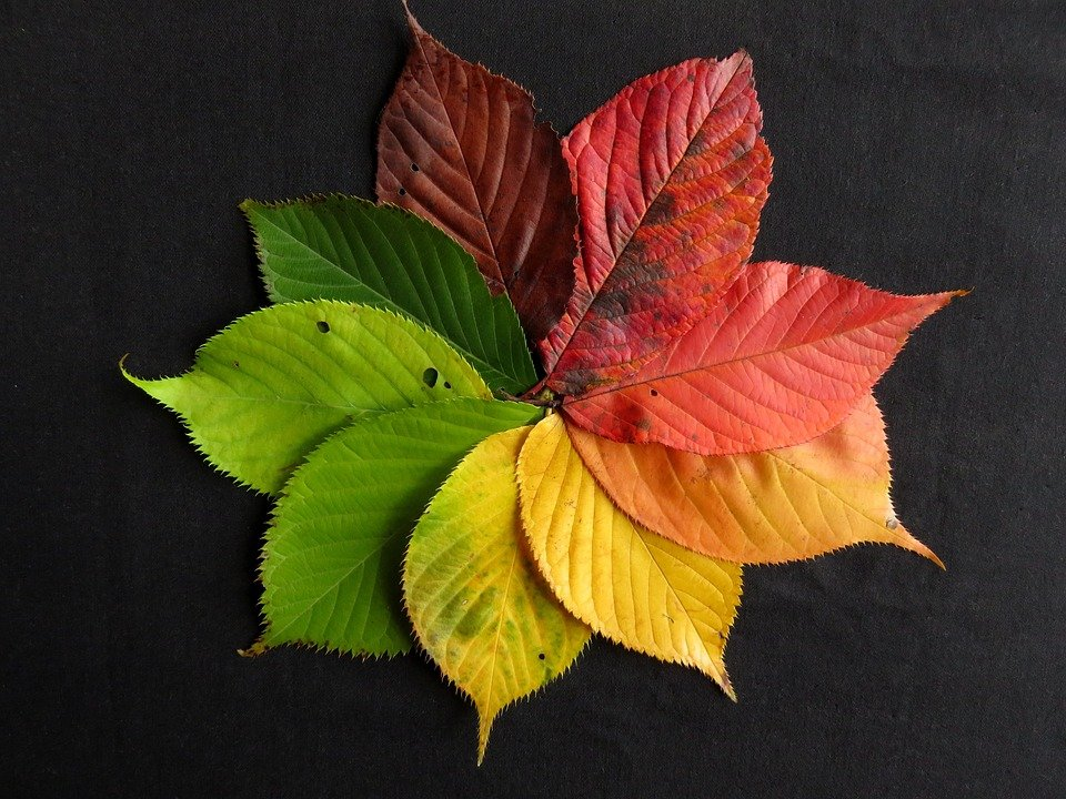 Autumn Leaves Fall Free photo on Pixabay