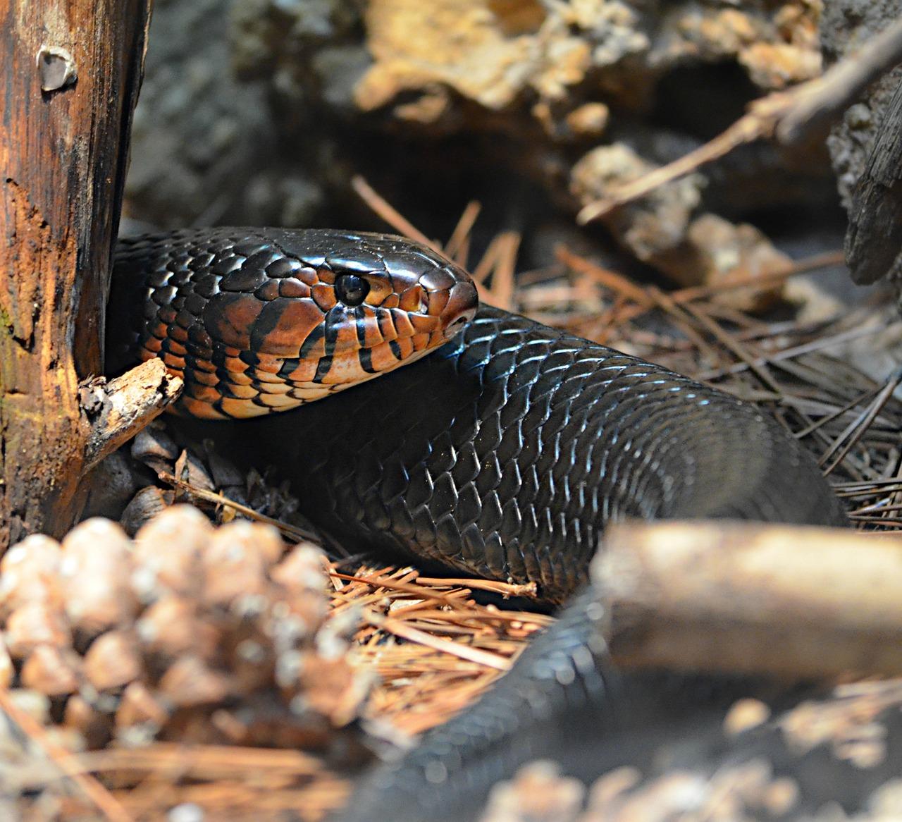 Картинки хищных змей каждом