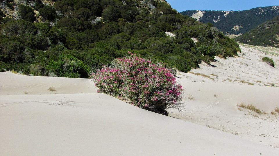 Cyprus, Karpasia, Golden Beach, Nature, Dunes, Sand