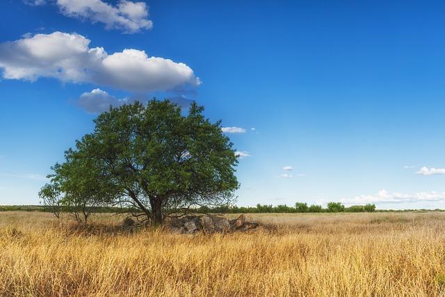 free photo tree landscape nature leaves free image