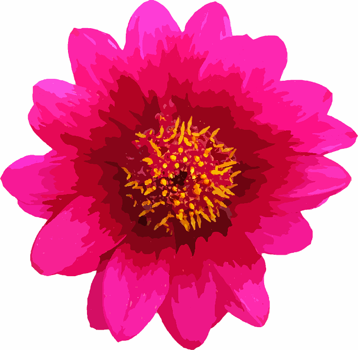 Flower macro single free image on pixabay flower macro single pink daisy floral nature mightylinksfo
