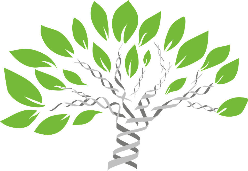 gene tree of life evolution free vector graphic on pixabay