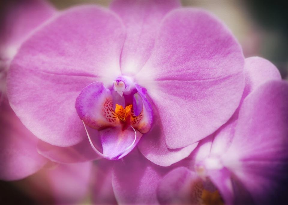 デンドロビウムの花言葉・色別の花言葉(白/紫)