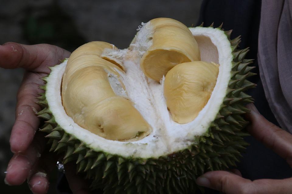 Durian Raja Buah - Foto gratis di Pixabay