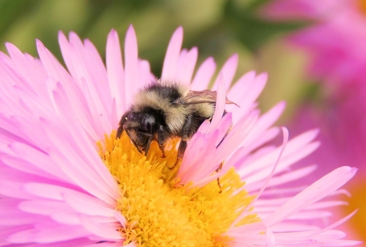 пыльца цветов фото один тот