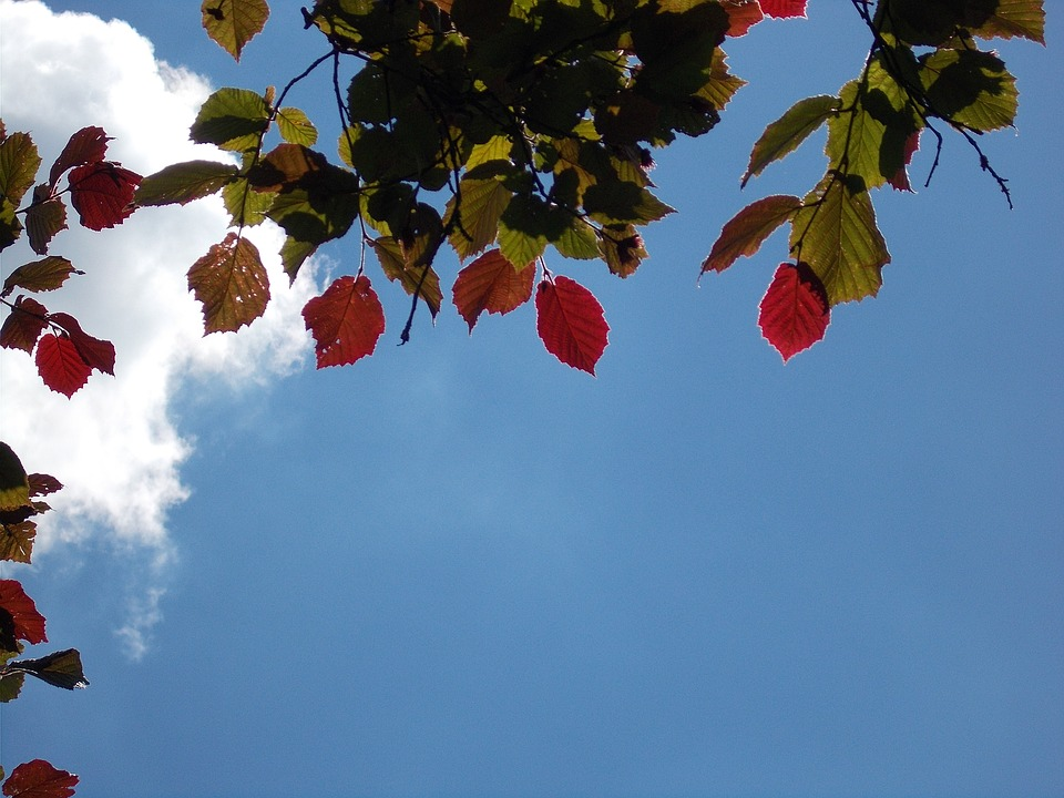 Blätter Färbung Nussbaum · Kostenloses Foto auf Pixabay