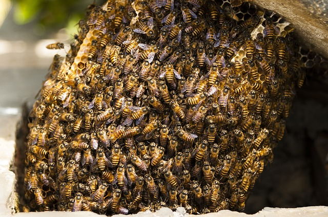 Free Photo Bees Hive Honey Insect Nature Free Image