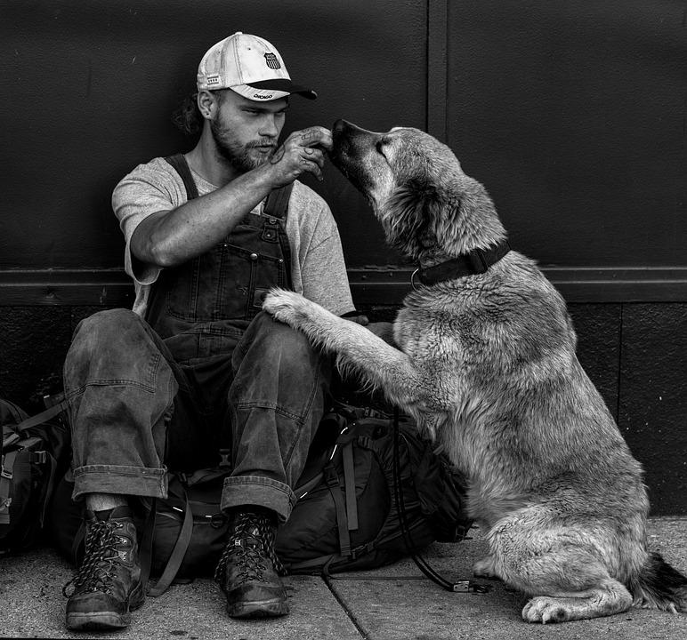 StreetVet, veterinarios que ayudan a las personas sin hogar