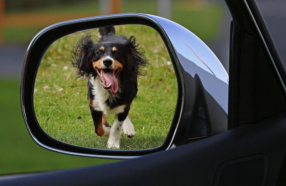 Hund, Aussetzen, Wegfahren, Tierschutz, Tierquälerei