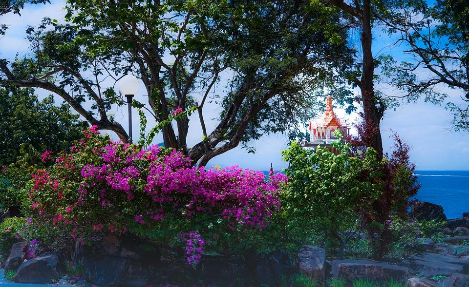 Phi Phi Island Tour, Phuket, Thailand, Garden, Flowers