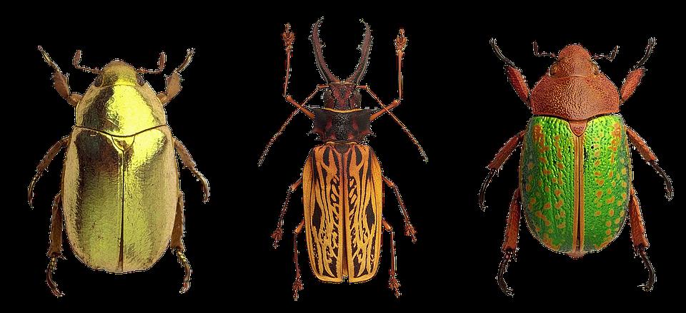 gratis billede biller insekter natur close up gratis. Black Bedroom Furniture Sets. Home Design Ideas