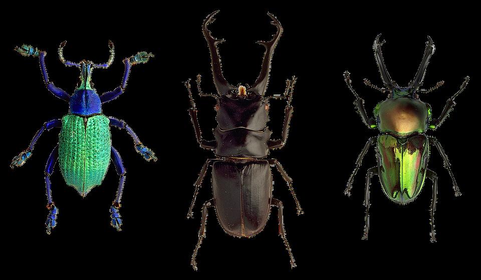 biller insekter natur gratis foto p pixabay. Black Bedroom Furniture Sets. Home Design Ideas