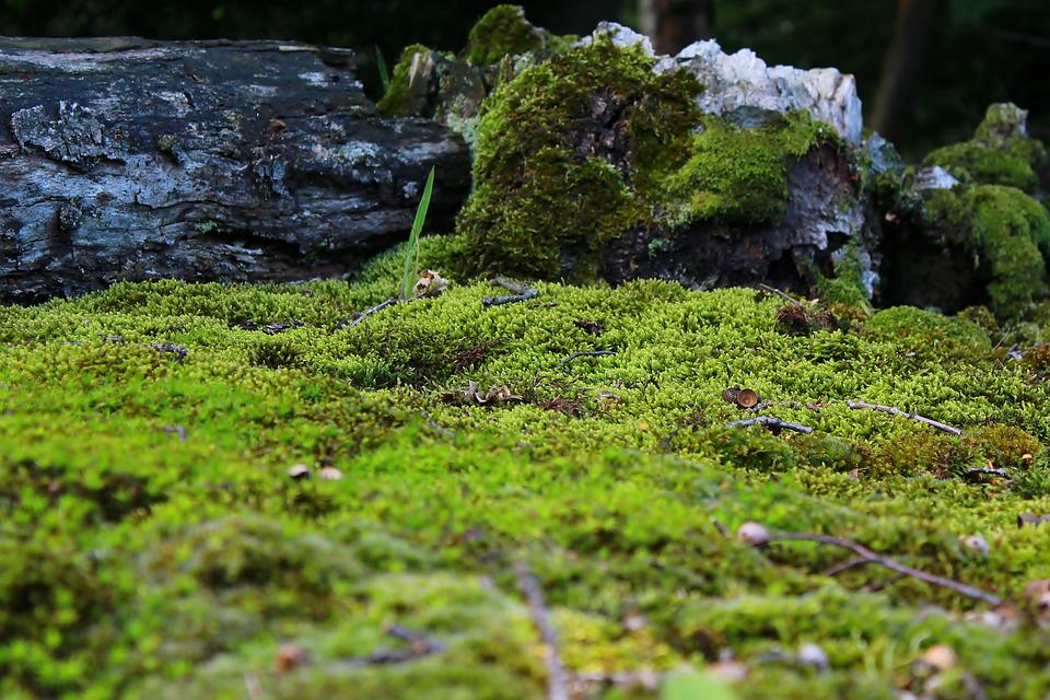moss mossy ground  u00b7 free photo on pixabay