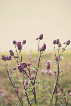 Thistles, Landscape, Wide, Distant