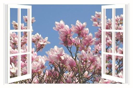 モクレン, マグノリアの木, 花, スプリング, 美学, 美しい日, 美しい朝