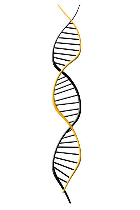 Free illustration: Dna, Deoxyribonucleic Acid, Dns - Free ...