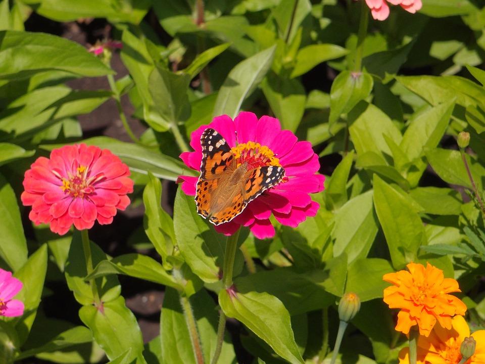 Fiori perenni da aiuola 28 images piante da fiore for Piante da aiuola perenni