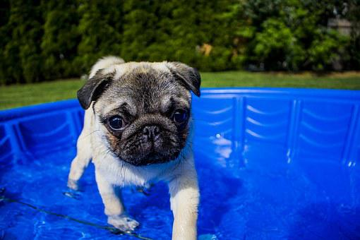 Swimming, Puppy, Summer, Dog, Funny