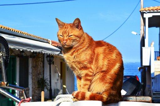 sexy divoké mačička