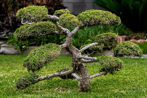 Bonsai, Miniature, Plant, Tree, Small