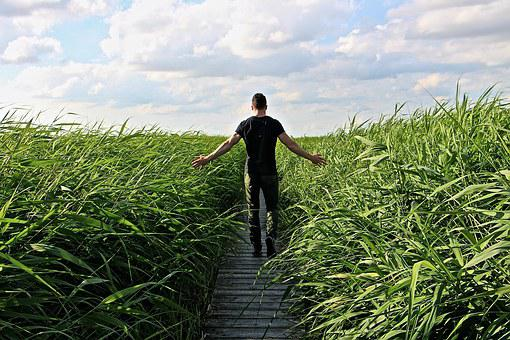 High Grass Walk Relax Enjoy Grasses Nature