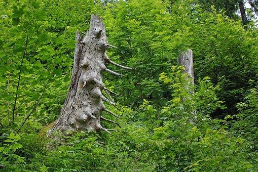 Alter Baum, Stumpf, Baum, Baumstumpf