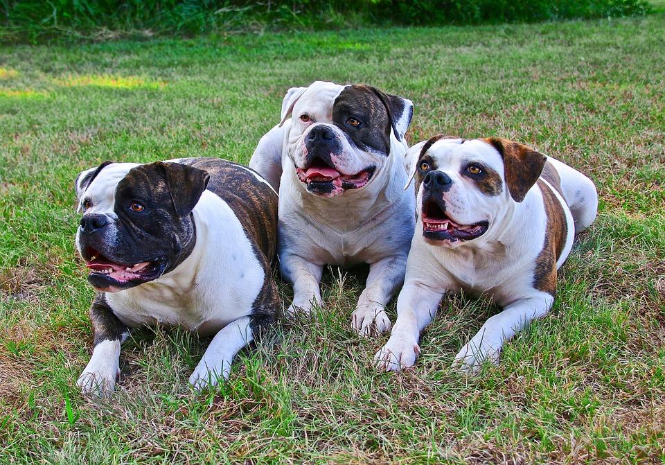 Curiosidades sobre las razas de perro