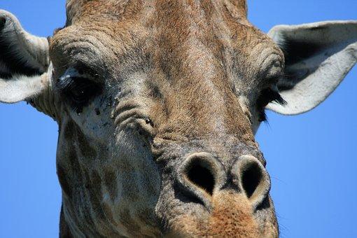 giraffen spiele