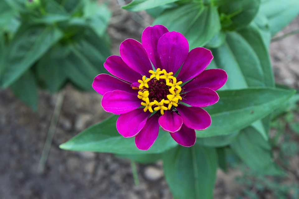 Free Photo: Violet, Flower, Purple Flower - Free Image On Pixabay