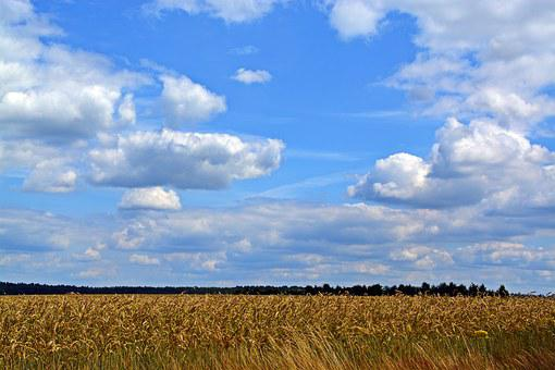 Sky, Clouds, Cereals, Landscape, Field