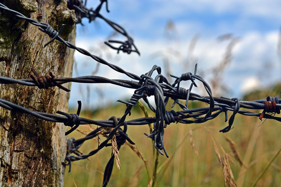 Free Photo Barbed Wire Fence Post Wood Pile Free