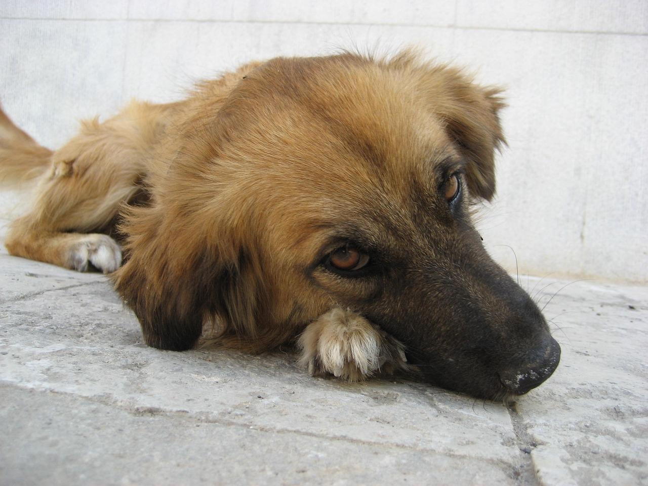 появляются трещины собака печальная фото имеет богатую историю