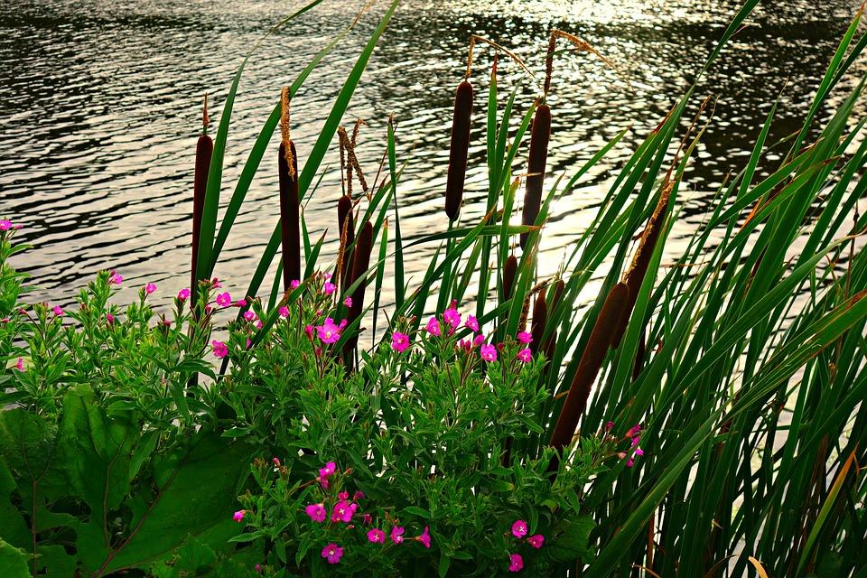 free photo river  riverbank  rushes  reeds free image vector heart artwork free christmas vector artwork free download