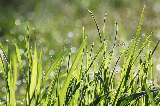 Dew, Grass, Morning, Morning Dew
