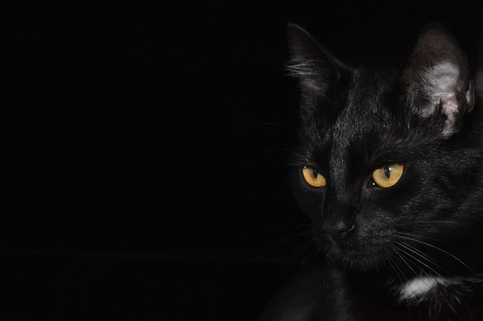 Black Cat Eyes Wallpaper: Free Photo: Cat, Black Background, Cat Eyes