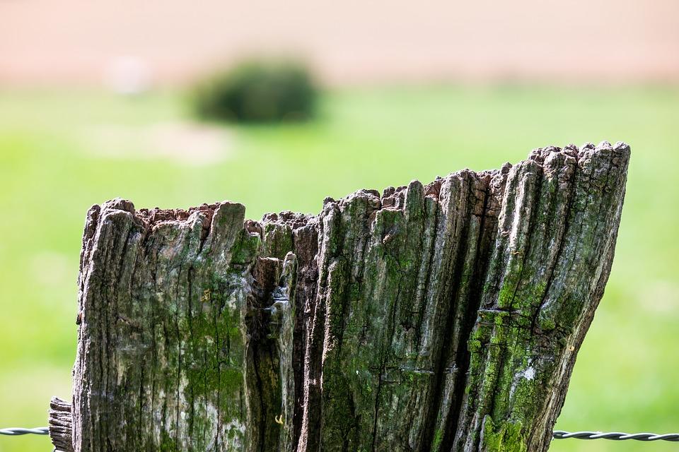 Zaun Draht Weide · Kostenloses Foto auf Pixabay