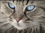 kot, zwierząt, portret kota