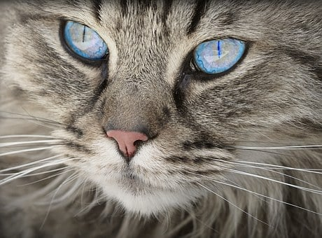 Cat, Des Animaux, Portrait De Chat