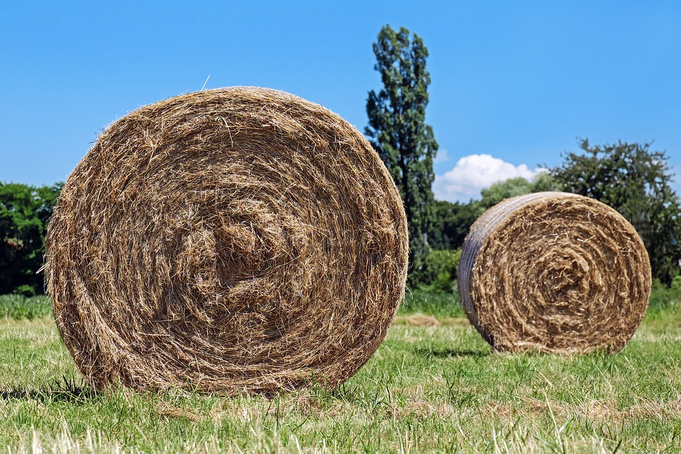 Hay Bales Field Round Free Photo On Pixabay - Bales