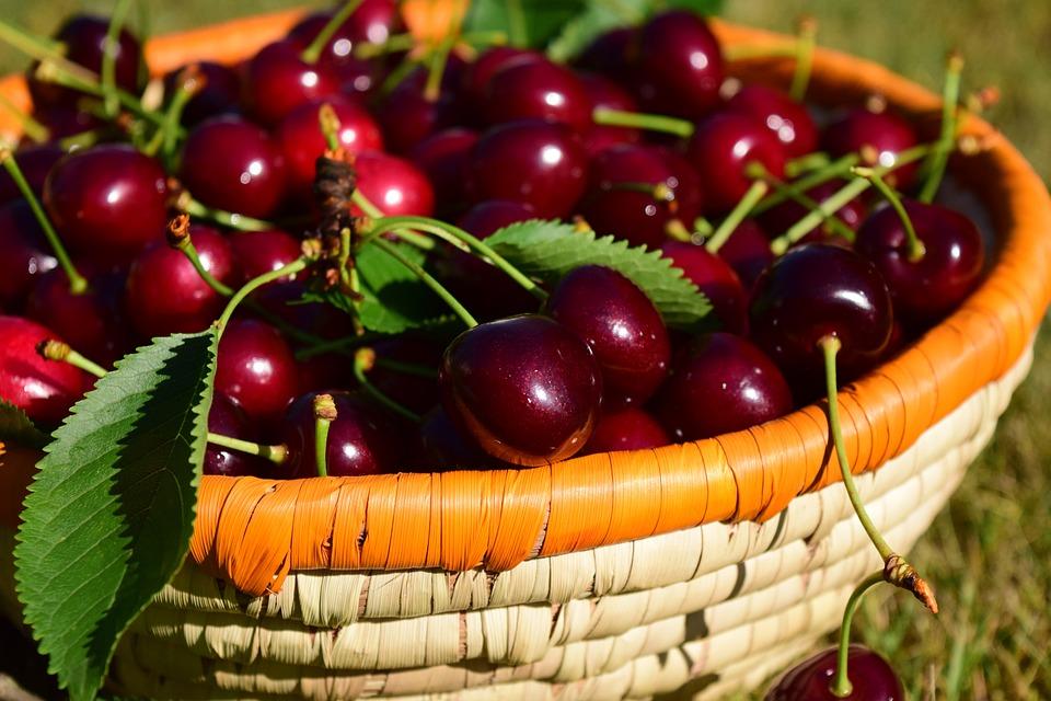 Free Photo Cherries Basket Fruit Red  Image On