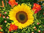 sun flower, flower,...