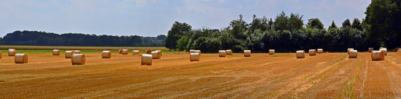 Straw Bales, Panorama, Round Bales