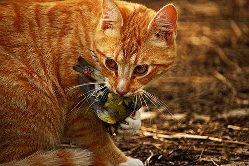 Mačička jesť obrázky