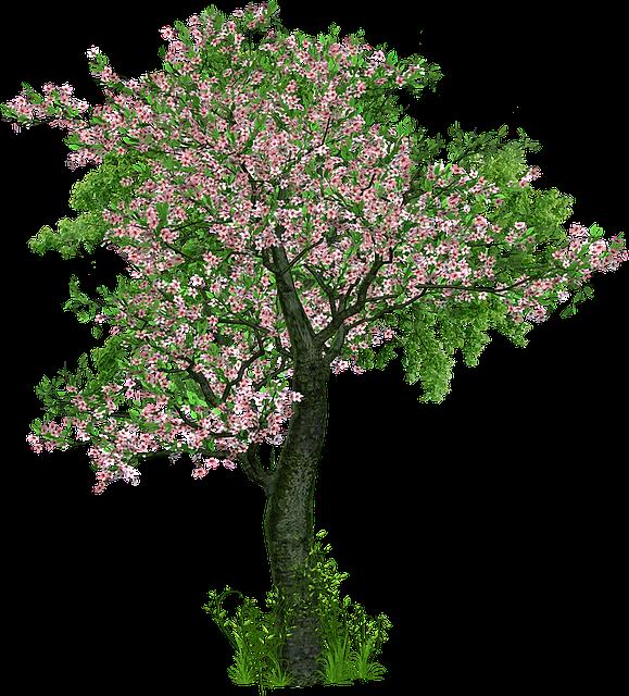 Tree Deciduous Flowers · Free Image On Pixabay