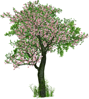 Tree, Deciduous Tree, Flowers, Grass