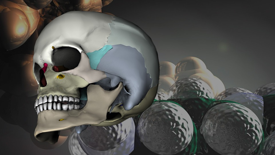 Schädel Kopf 3D-Model · Kostenloses Bild auf Pixabay