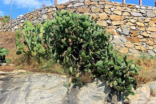 La culture du cactus : une véritable solution écologique !