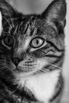 Cat, Feline, Animal, Pet, Kitten, Kitty