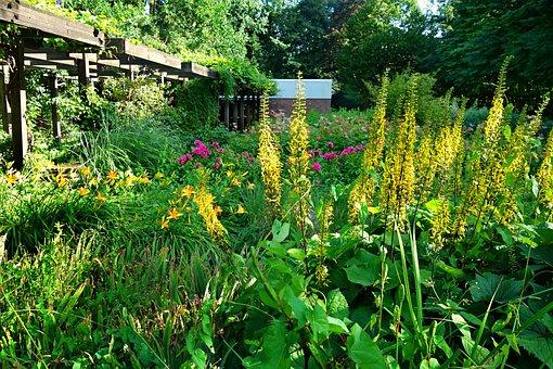 Jardin, Fleur, Parterre De Fleurs